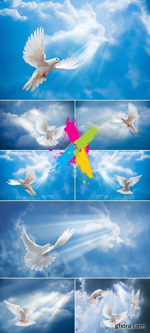 Stock Photo - Flying Doves & Sky