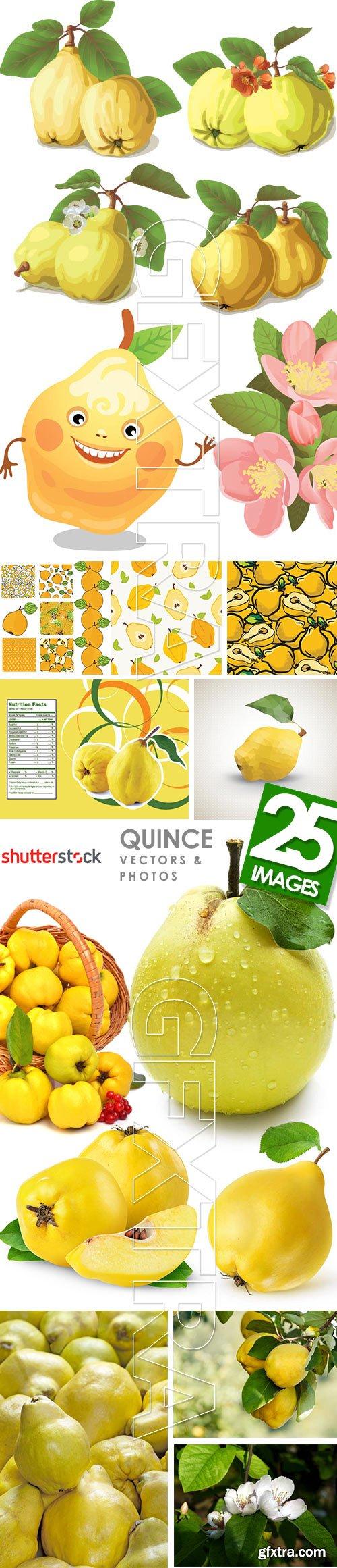 Quince Vectors & Photos 9xEPS, 16xJPG