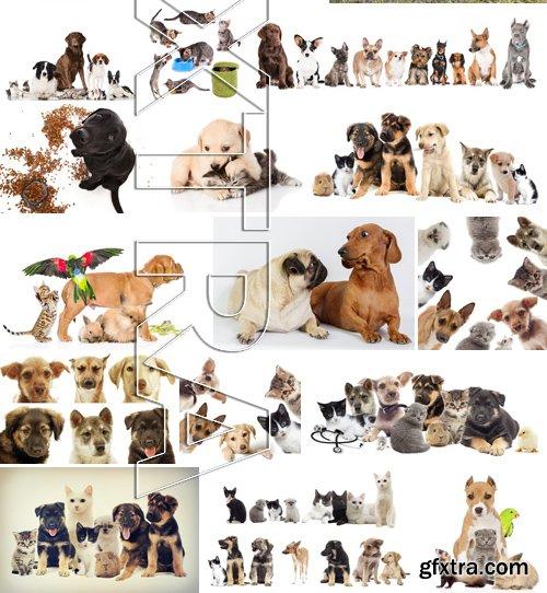 Stock Photos - Pets, 25xJPG