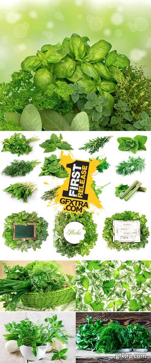 Stock Photo Collection of fresh herbs isolated on white background