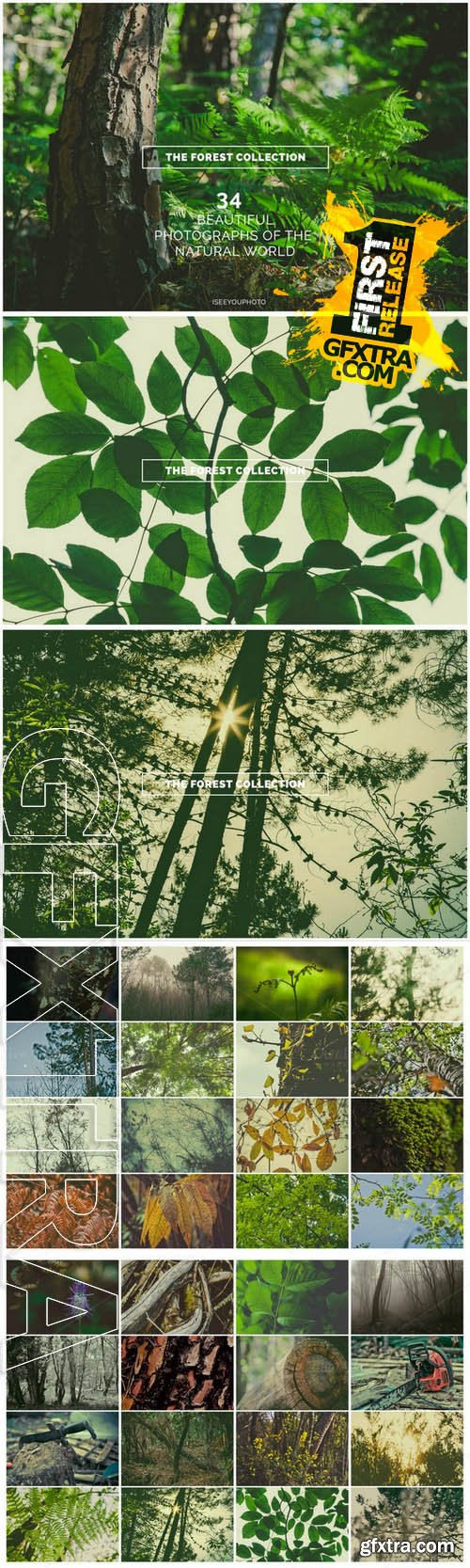 The Forest Collection - Iseeyouphoto - Creativemarket 72319