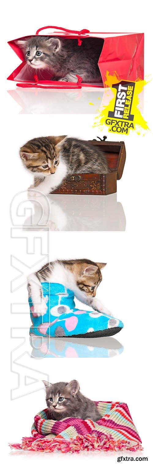 Stock Photos - Cute Kitten