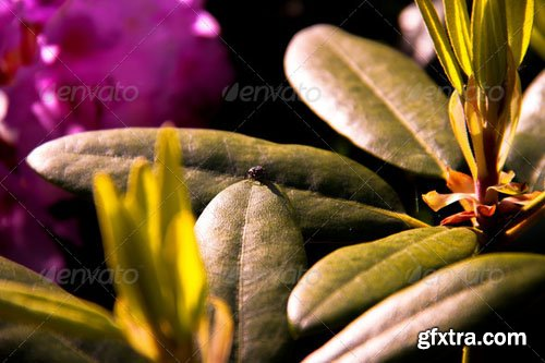 Photodune - Close-up of a bug on a leaf 5098034