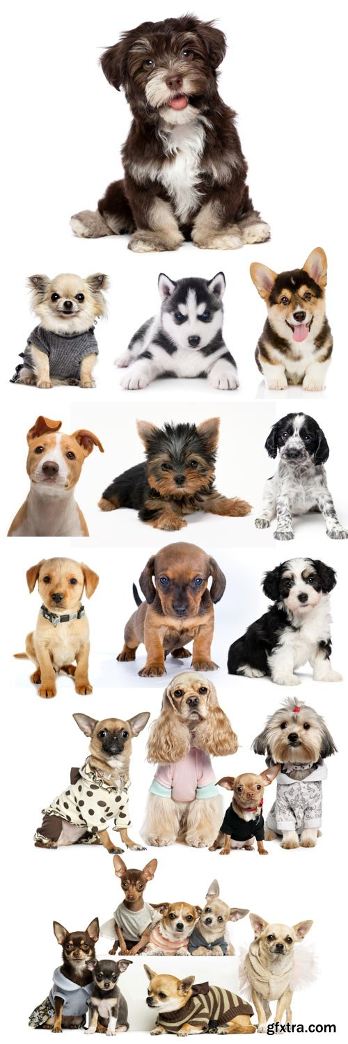 Funny puppies on a white background