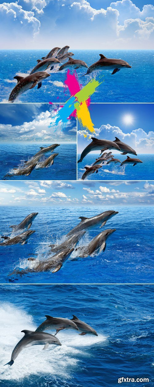 Stock Photo - Dolphins