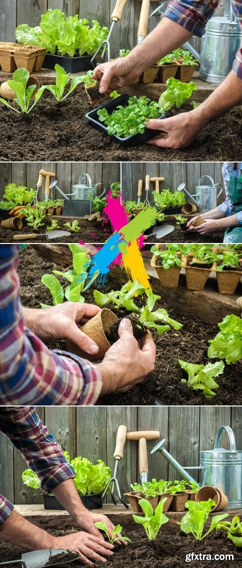 Stock Photo - Farmer Planting Young Seedlings