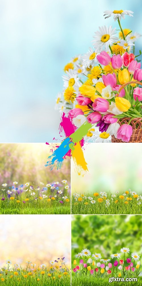 Stock Photo - Spring Flowers Cards 9