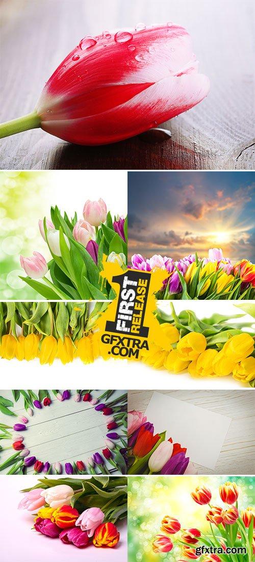 Stock Photo: Tulip flower on wooden background