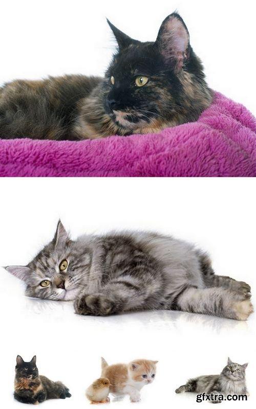 Stock Photos - Cats Isolated