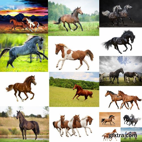 Horse Collection - 25 HQ Images