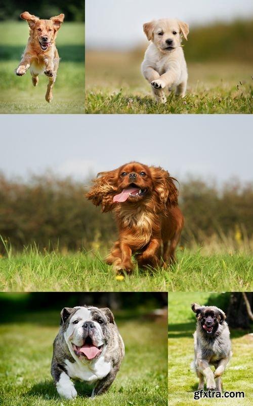 Stock Photos - Dogs Running
