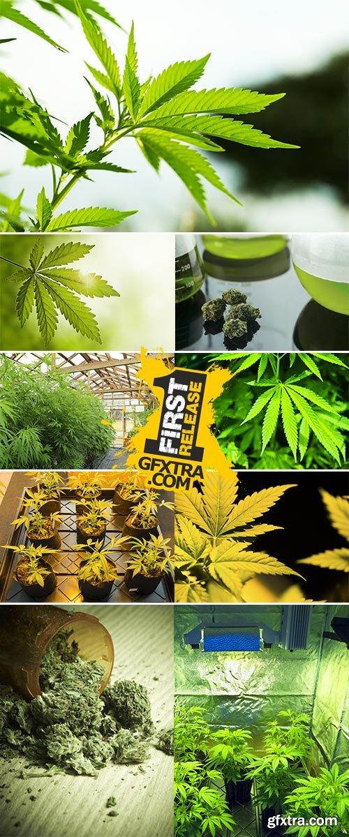 Stock Photo: Hand holding Young leaf of marijuana