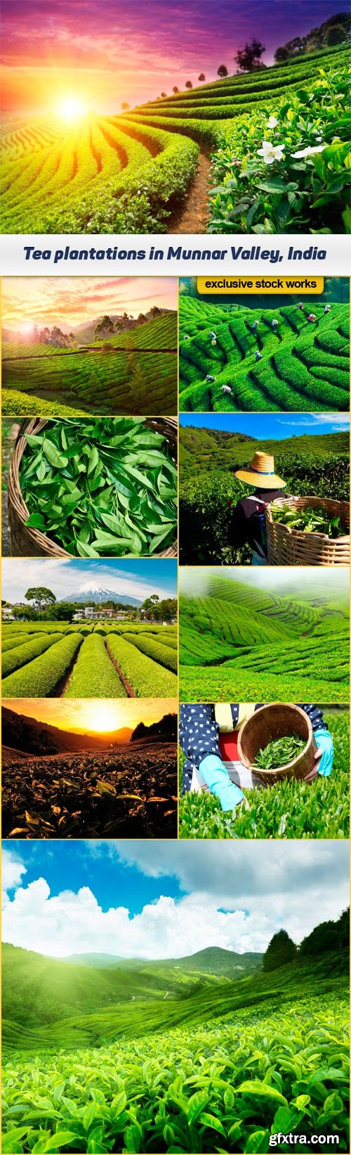 Tea plantations in Munnar Valley, Kerala, India 10x JPEG
