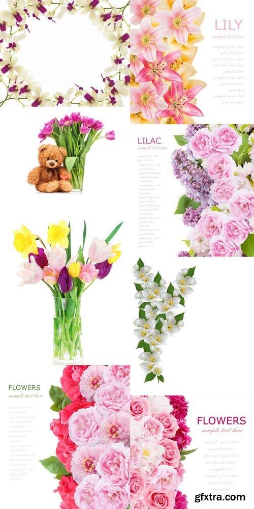 Stock Photos - Flowers Background Isolated