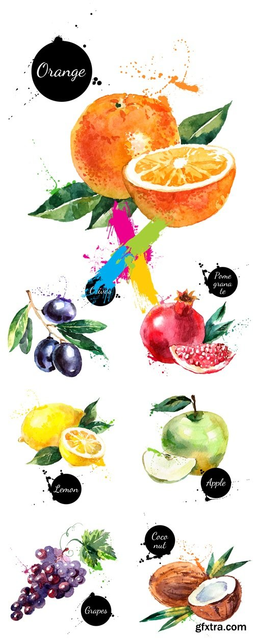Watercolor Painted Fruits Vector