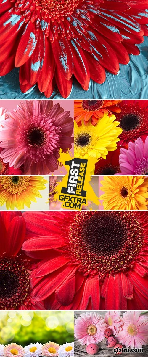 Stock Photo: Colorful gerbera flowers on the wooden table