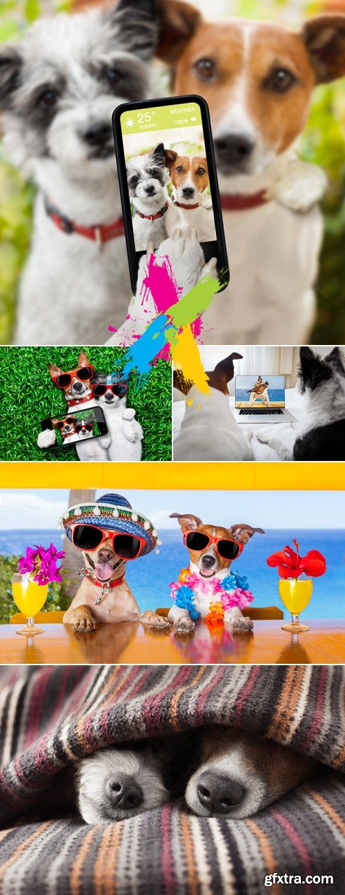 Stock Photo - Two Funny Dogs