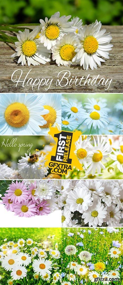 Stock Photo wildflowers daisies