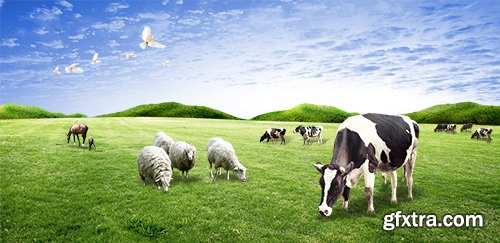 PSD Source - Livestock on the lawn