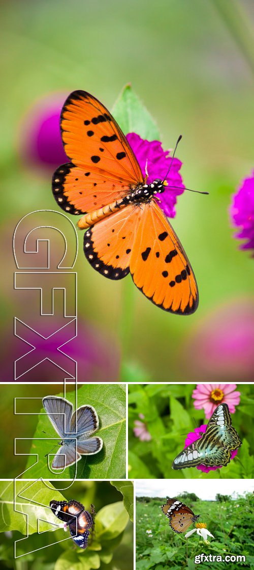 Stock Photos - Butterfly On A Green Leaf