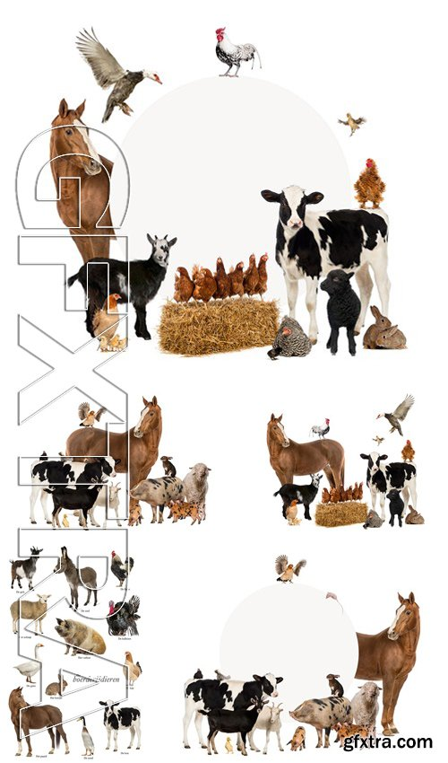 Stock Photos - Group Of Farm Animals
