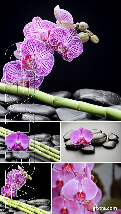 Stock Photos - Pink Phalaenopsis Orchid Flower