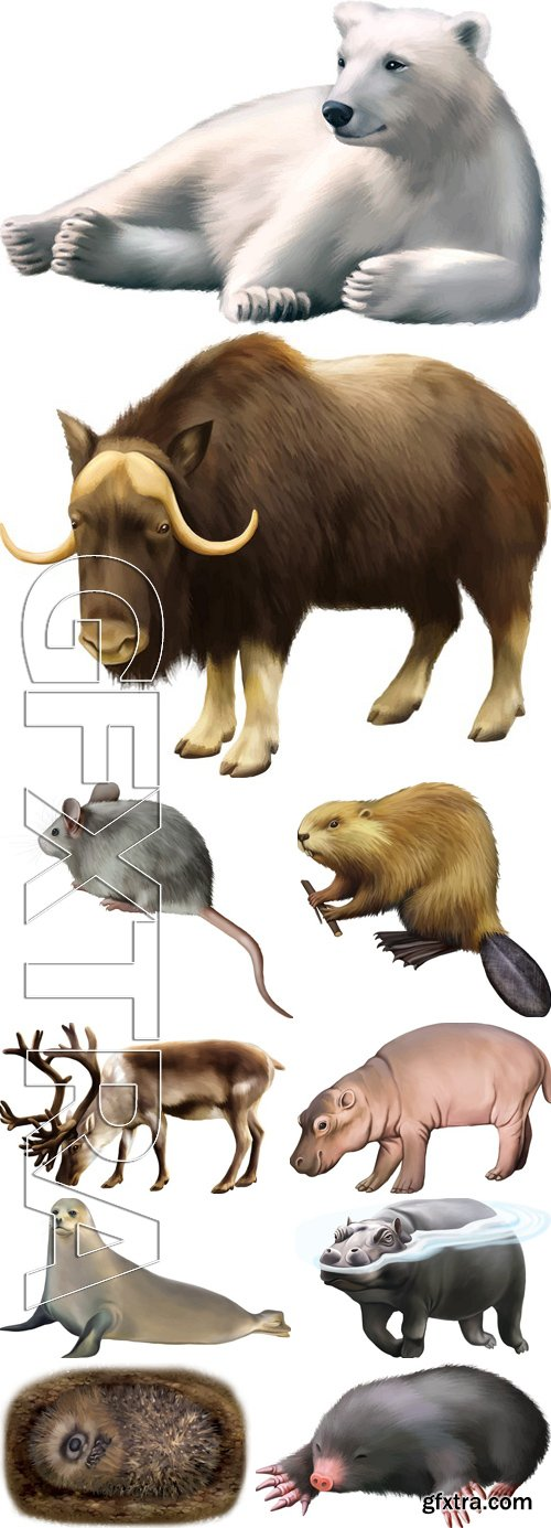 Stock Vectors - Different Animals 5