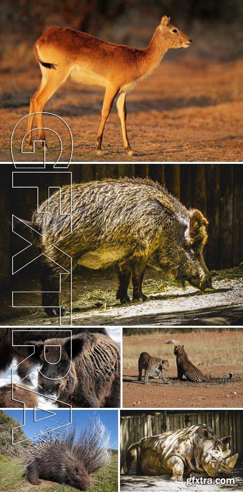 Stock Photos - Different Animals 7