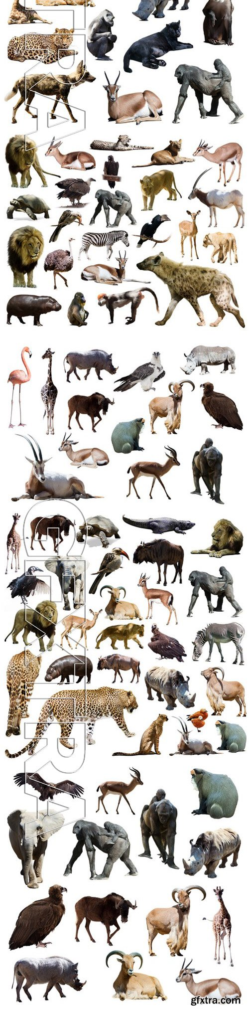 Stock Photos - Different African Animals 9