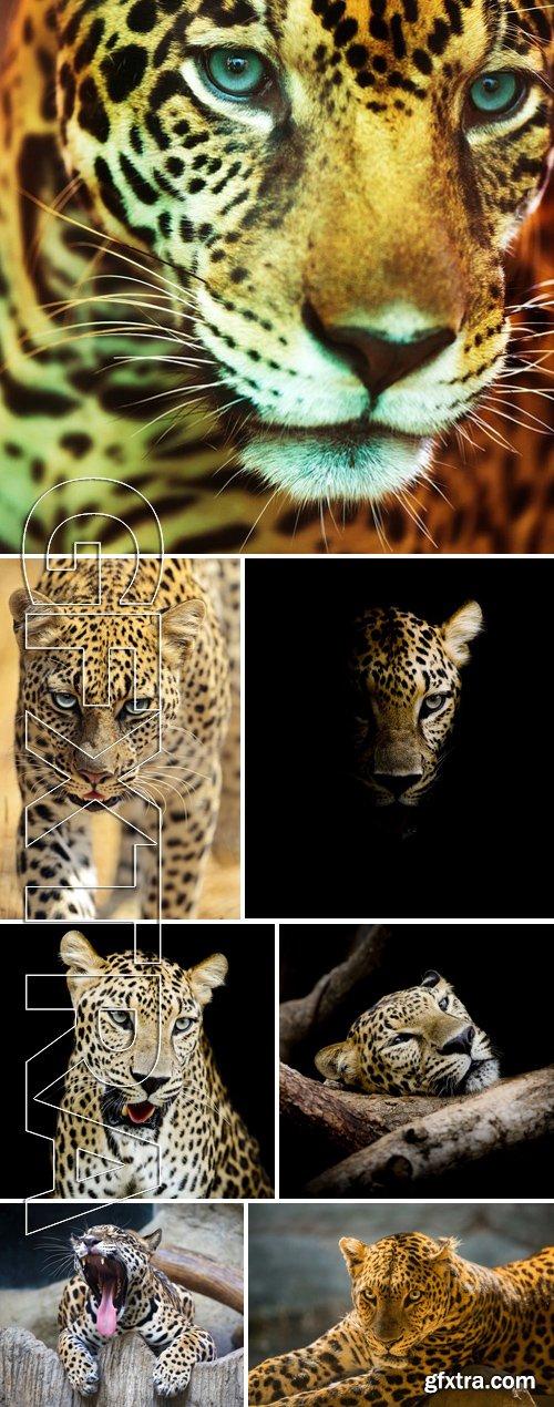 Stock Photos - Leopard Portrait 2