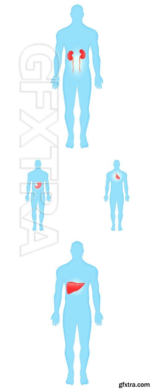 Stock Vectors - Modern Medical vector infographics, diseases of