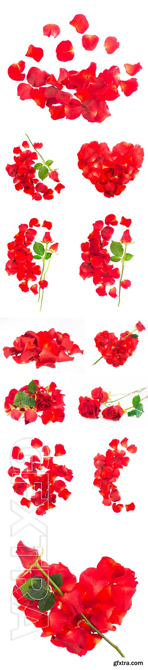 Stock Photos - Red rose petals isolated over the white background