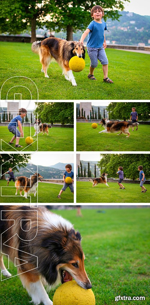 Stock Photos - Young boy playing with a collie dog in the park with a ball