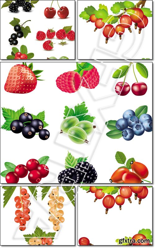 Big group of fresh berries and cherries - Vector