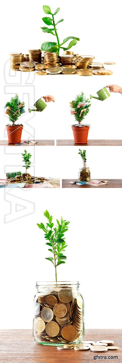 Stock Photos - Money with growing sprout isolated on white. Female hand watering decorative tree in pot with money isolated on white