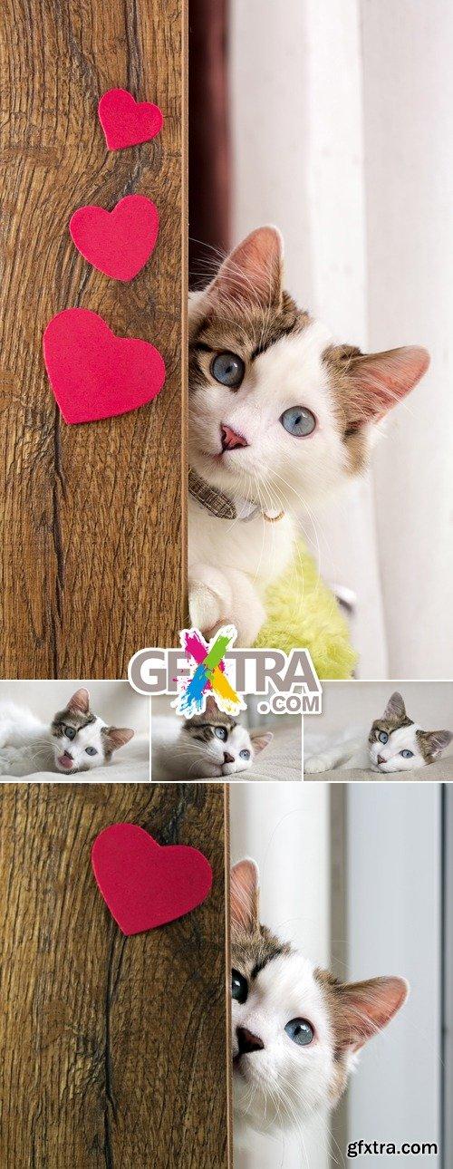 Stock Photo - Cute Cat