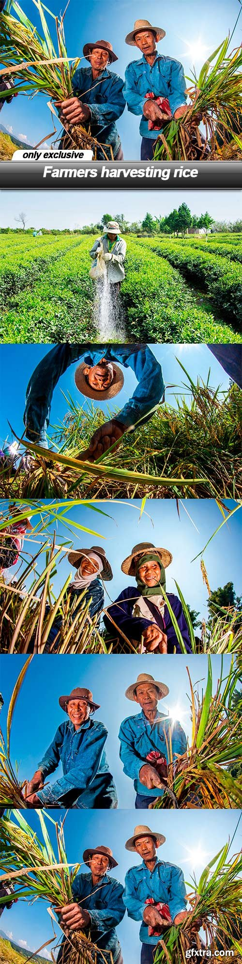 Farmers harvesting rice - 5 UHQ JPEG