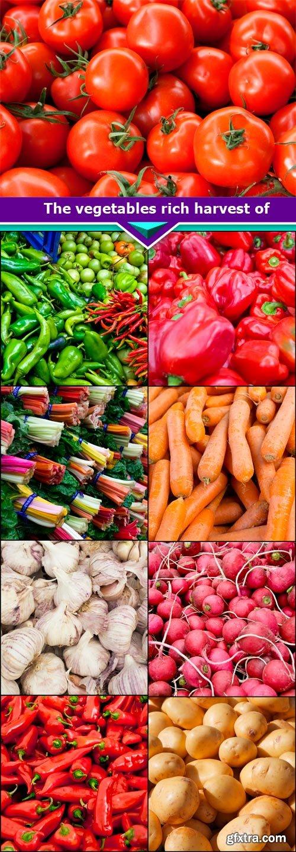 The vegetables rich harvest of 9x JPEG