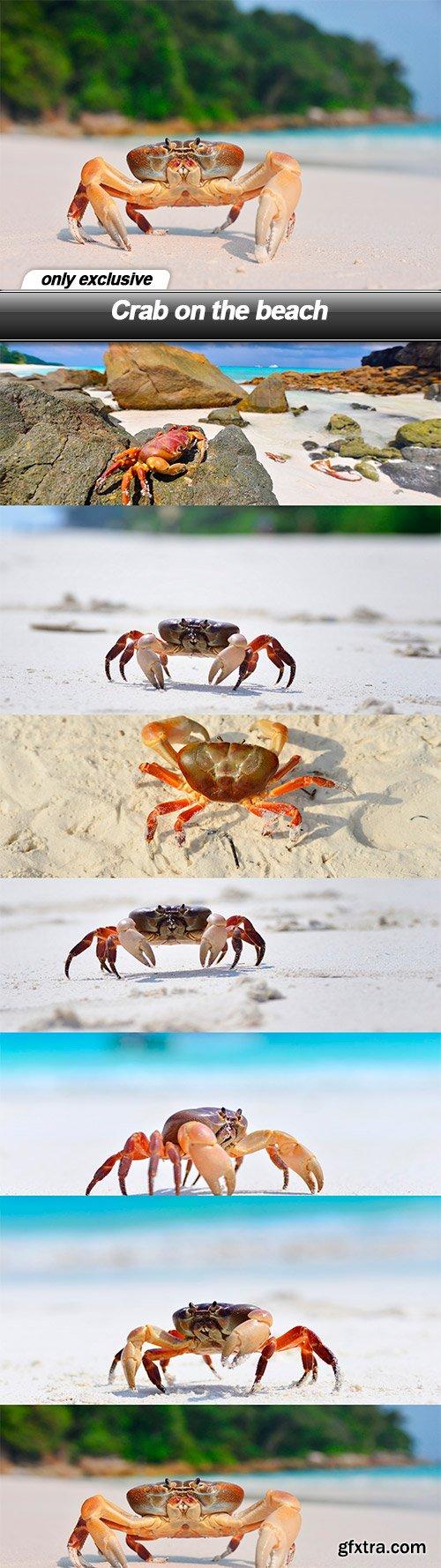 Crab on the beach - 7 UHQ JPEG