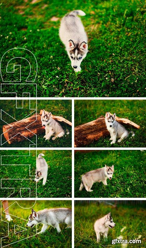 Stock Photos - Animal dog