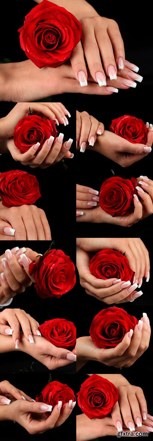 Delicate female hands with a red rose