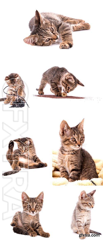 Stock Photos - Small gray kitten isolated on white background