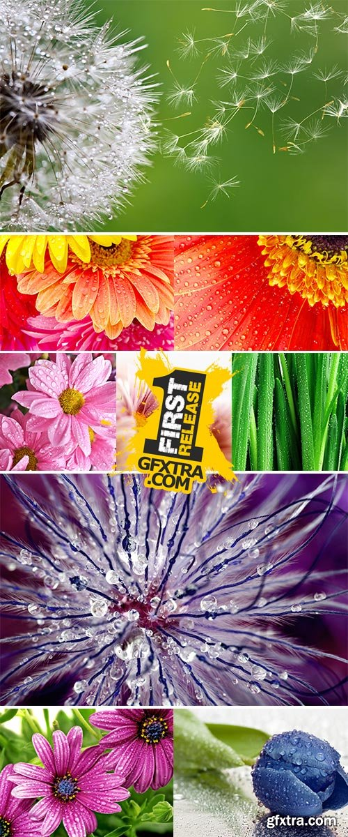 Stock Images - Close-up flowers with water drop