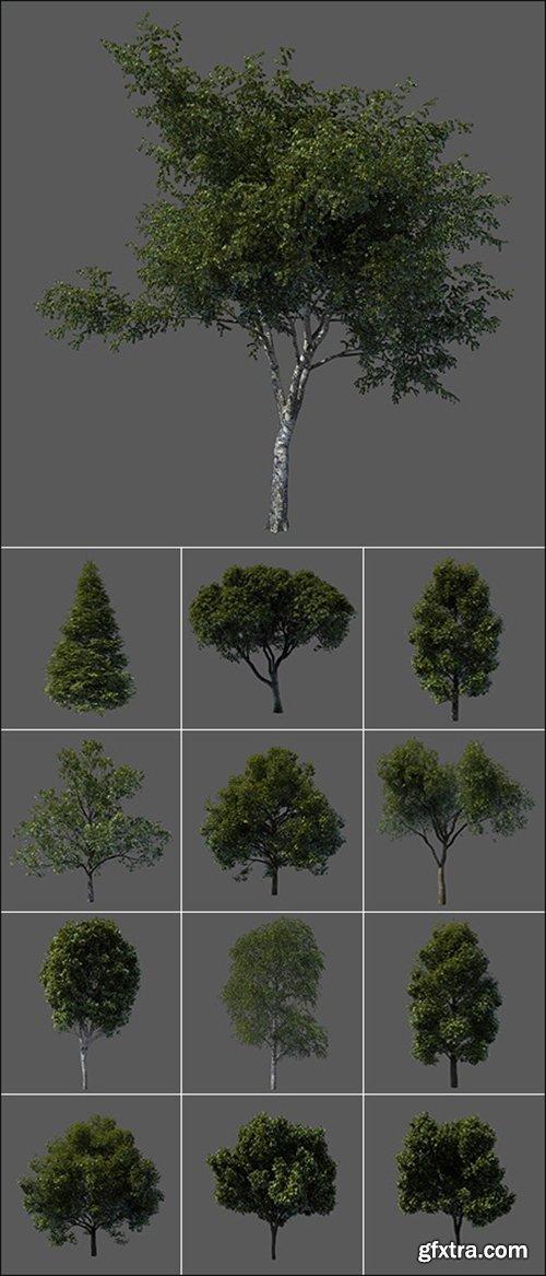 3D Models Tree from Vargov