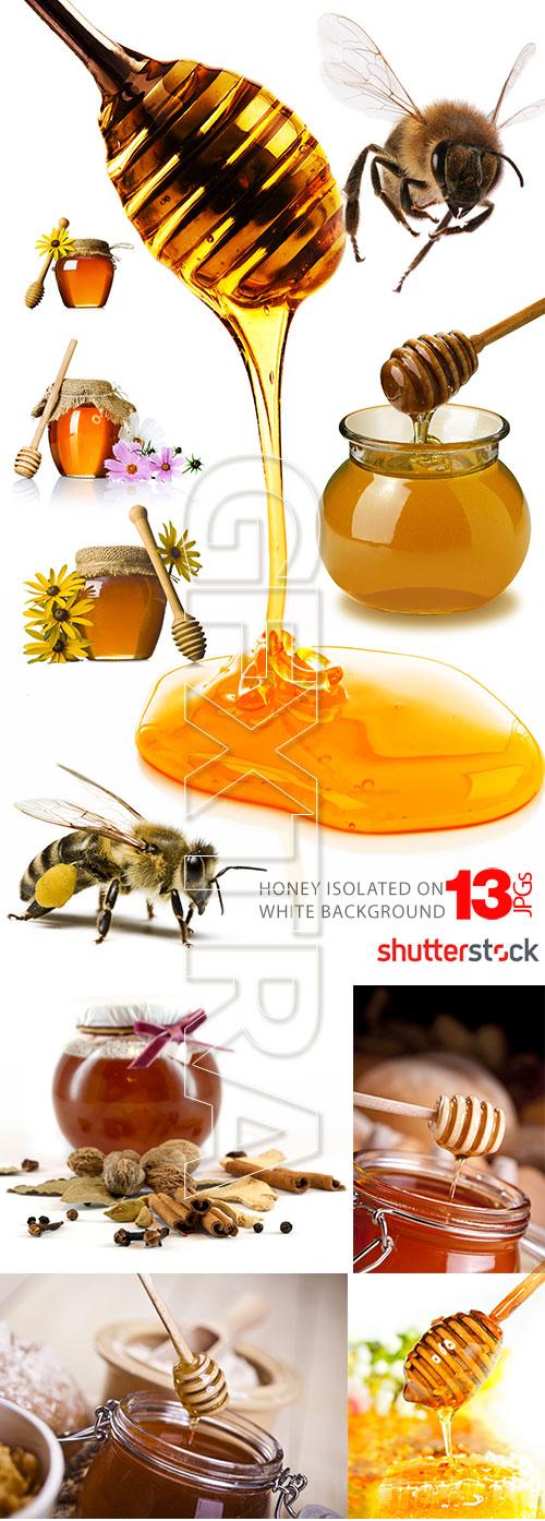 Honey & Bee 13xJPG