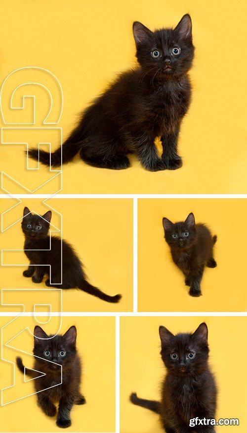 Stock Photos - Small fluffy black kitten sitting on yellow background