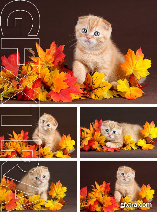 Stock Photos - Cute ginger kitten hiding in yellow leaves