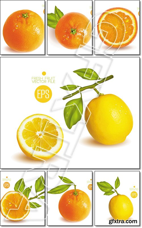 Citrus isolated, beautiful fresh fruit, branch with leaves - Vector