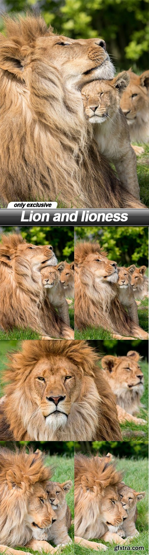 Lion and lioness - 5 UHQ JPEG
