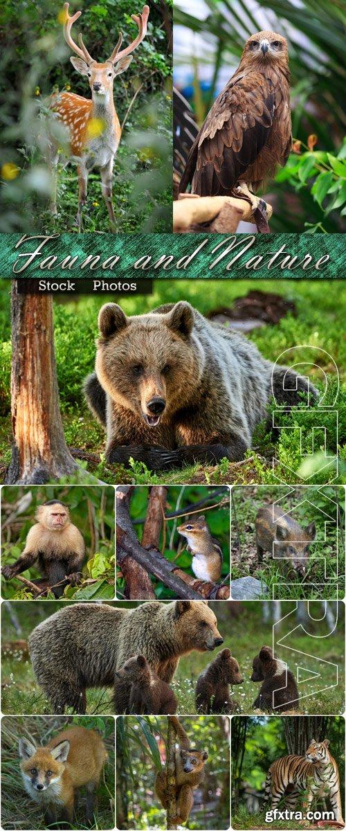 Fauna against the nature